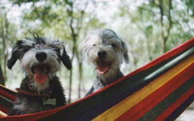 The benefits of using hemp gels and VETERCANN balms in animals
